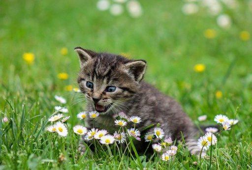 recipientes para gatos