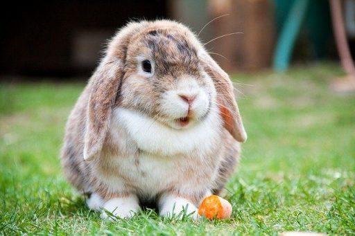 Para conejos